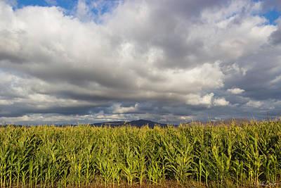 Sweet Corn Farm Photograph - California Cornfield by Heidi Smith