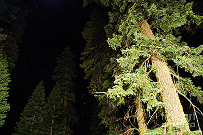 Black Light Photograph - California Evergreens At Night by HD Connelly