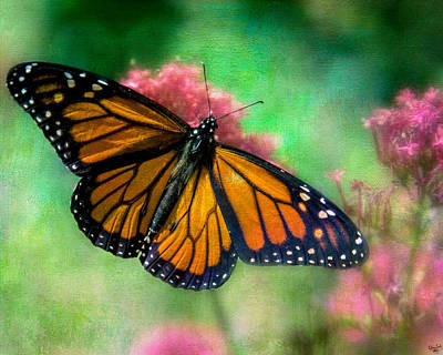Photograph - California Monarch by Chris Lord