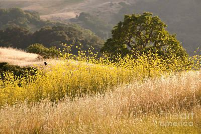 California Mustard Fields Art Print