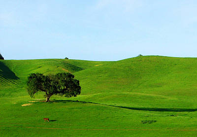 Photograph - California Oak And Rolling Green Hills by C Ribet