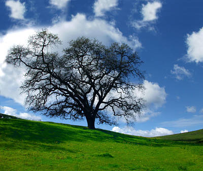 Photograph - California Oak Trees Free Spirit by C Ribet