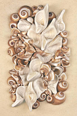 Seashell Photograph - California Opus 23 by Carol Zee