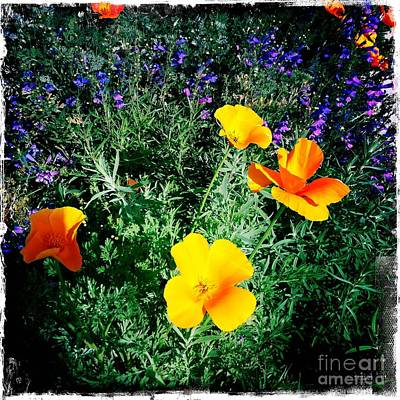 Art Print featuring the photograph California Poppy by Nina Prommer