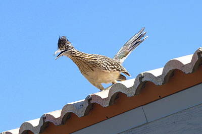 Art Print featuring the photograph California Roadrunner by Carla Parris