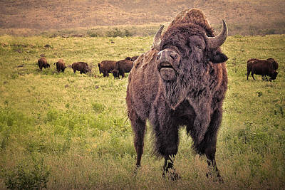 Photograph - Call Of The Bison by Tamyra Ayles