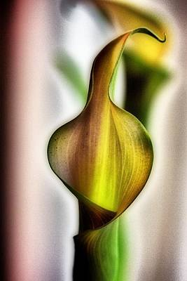 Calla Art Print by Jennifer Woodworth