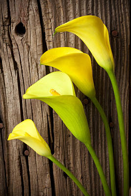 Calla Lilies Against Wooden Wall Print by Garry Gay
