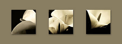 Photograph - Calla Lilies Art by Sumit Mehndiratta