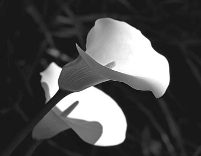 Photograph - Calla Lilies In Black And White by Jennie Marie Schell