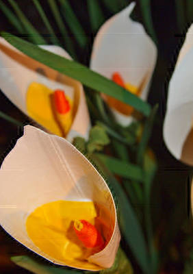 Photograph - Calla Lilly's 'ala Duck Tape by Laura  Grisham