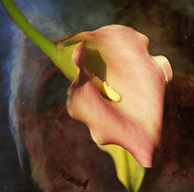 Photograph - Calla Lily by Barbara Middleton