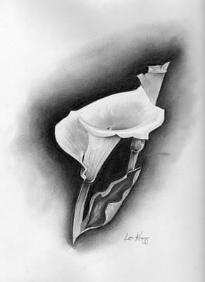 Calla Lily Art Print by Lou Knapp