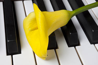 Piano Photograph - Calla Lily On Keyboard by Garry Gay