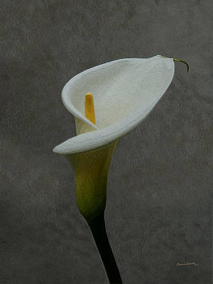 Calla Lily Painterly 2 Art Print by Ernie Echols