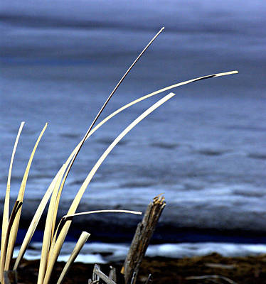 Janet Smith Photograph - Calm by Janet Smith
