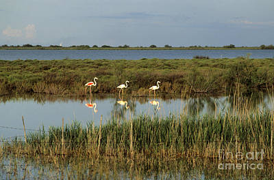 France Provence Photograph - Camargue.etang Of Vacarres by Bernard Jaubert