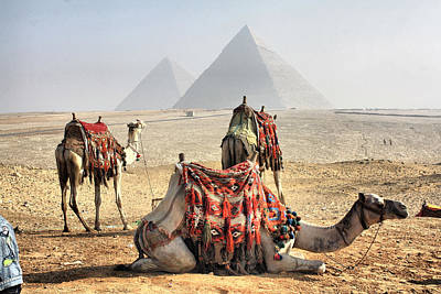 Camel And Pyramids, Caro, Egypt. Art Print by Oudi
