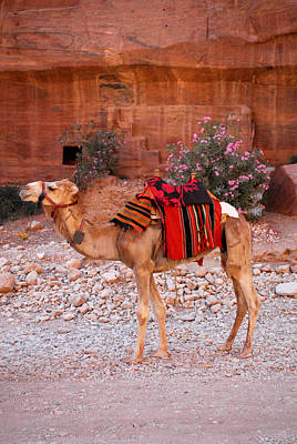 Digital Art - Camel At Petra Jordan by Eva Kaufman