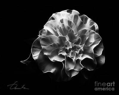 Photograph - Camellia Admiration by Danuta Bennett