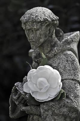 Photograph - Camellia Four by Ken Frischkorn
