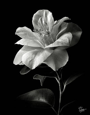 Photograph - Camellia In Black And White by Endre Balogh