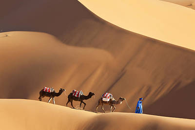 Camels & Dunes, Erg Chebbi, Sahara Desert, Morocco Art Print