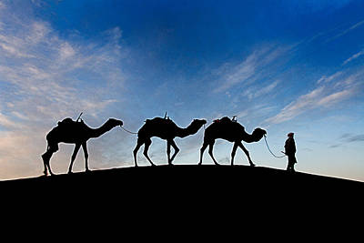 Photograph - Camels - 3 by Okan YILMAZ