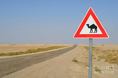 Photograph - Camels Crossing Road Sign by Sami Sarkis