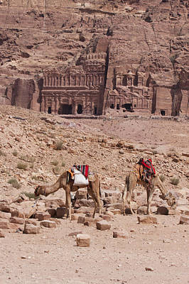 Camels In Front Of The Royal Tombs Petra Art Print by Martin Child