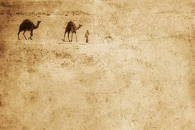 Olympic Sports - Camels In The Desert by Chris Knorr