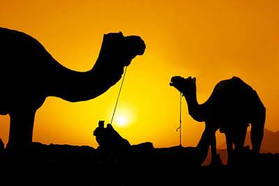 Camels Of Rajasthan Original by Mukesh Srivastava