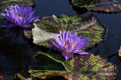 Photograph - Camo Waterlilies by Byron Varvarigos