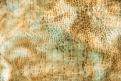 Dappled Light Photograph - Camouflage Background by Tom Gowanlock