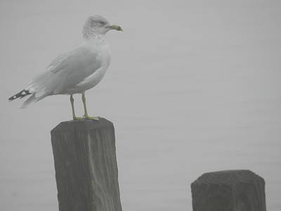 Camouflaged Seagull Art Print by Dennis Leatherman