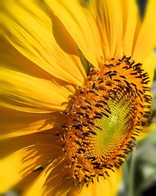 Photograph - Can You Say Sunshine by Lynnette Johns