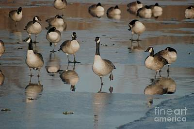 Art Print featuring the photograph Canada Geese by Mark McReynolds