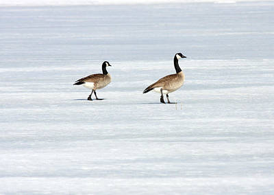 Photograph - Canada Goose - 0029 by S and S Photo