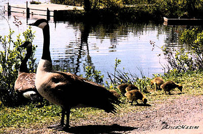 Photograph - Canadian Geese At Trojan Lake by Ericamaxine Price