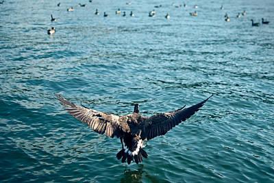 Photograph - Canadian Landing by Jason Heckman