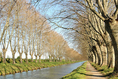 Canal With Tree Art Print
