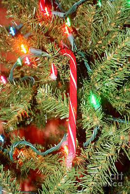 Photograph - Candy Cane On Christmas Tree by Susan Stevenson