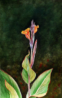 Lilies Royalty-Free and Rights-Managed Images - Canna Lily by Irina Sztukowski