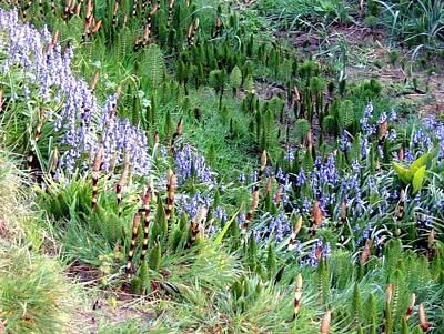 Fleetwood Mac - Cannon Beach Flora by Will Borden