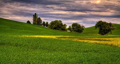 Rapeseed Photograph - Canola Among The Wheat by David Patterson