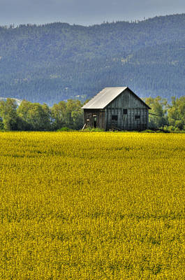 Photograph - Canola Field by Don Wolf