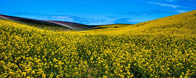 Canola Hills In The Palouse Art Print by David Patterson