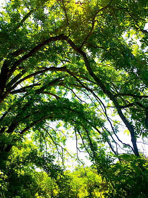 Photograph - Canopy by Amber Hennessey