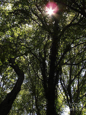 Photograph - Canopy by Mark Holbrook