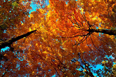 Autumn Leaf Photograph - Canopy by Phil Koch